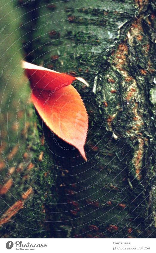 Nature Tree Plant Calm Leaf Relaxation Autumn Thin Serene Tree trunk Botany Tree bark Tree structure