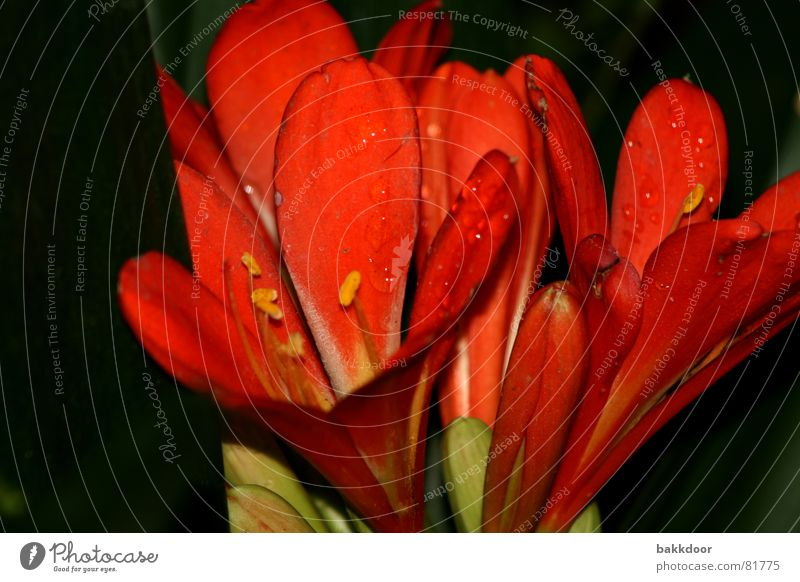 Nature Flower Red Summer Black Life Dark Emotions Blossom Bright Background picture Large Fresh Grief Happiness Action