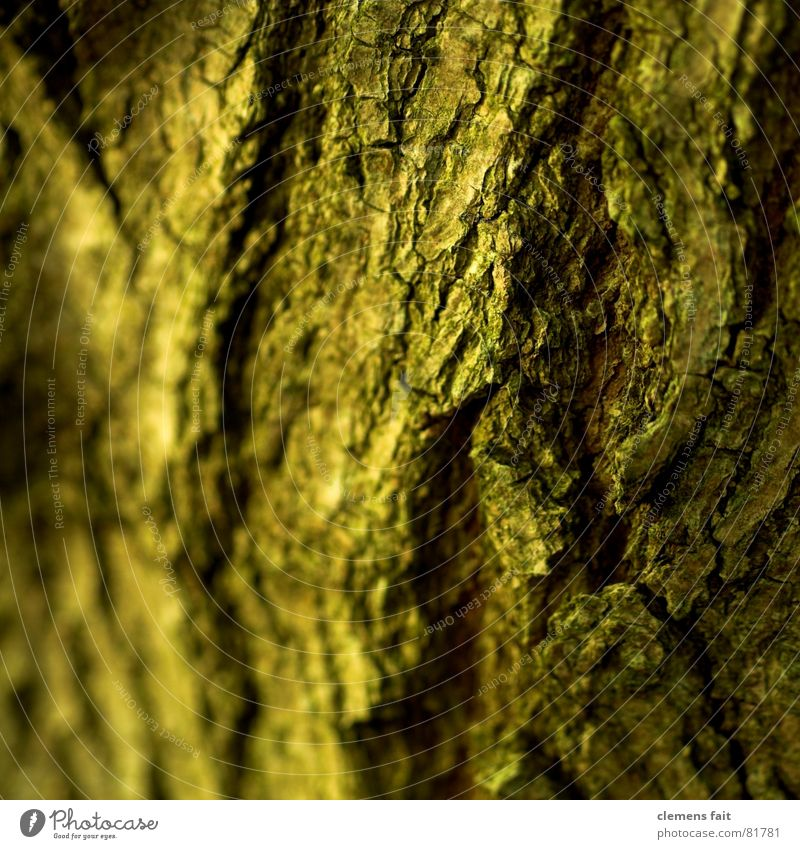 trunk Crumbled Tree Tree bark Wrinkles Wood Yellow Brown Past Decline Old encrusted Tree trunk