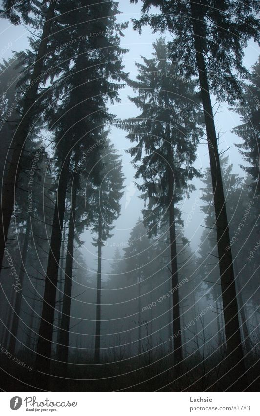 Tree Forest Dark Fog Threat Spruce