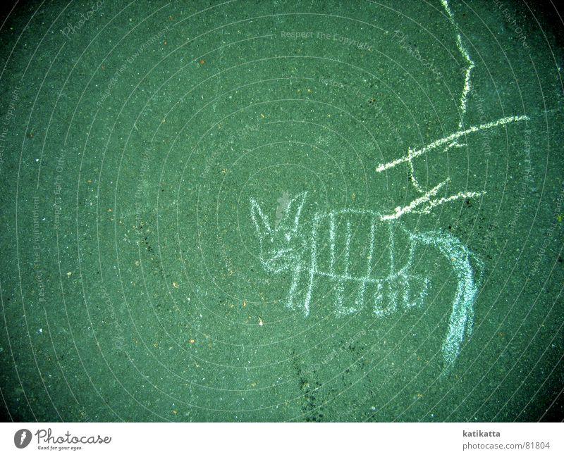 Cat Dog Green Animal Colour Street Playing Lanes & trails Stone Funny Line Infancy Sweet Stripe Cute Asphalt
