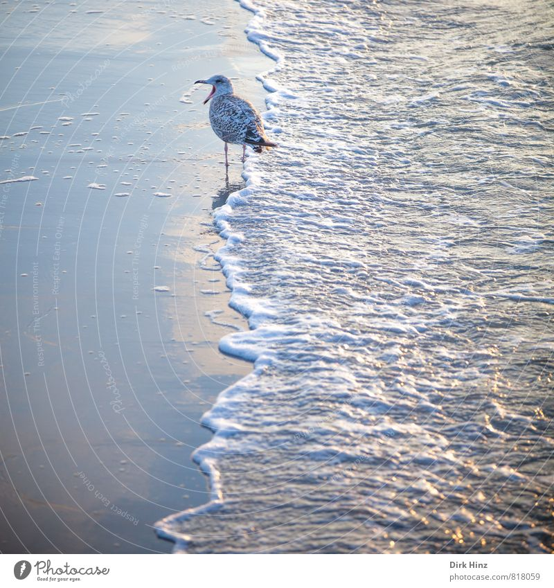 Nature Vacation & Travel Blue White Water Ocean Loneliness Animal Beach Environment Coast To talk Sand Bird Waves Wild animal