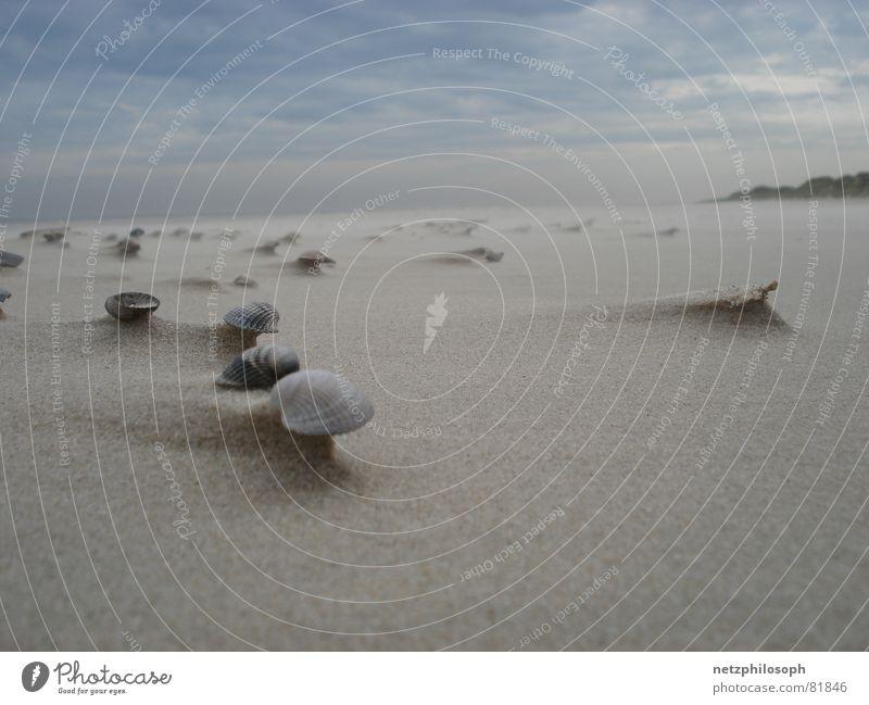 Beach Far-off places Sand Coast Lake Germany Earth Wind Multiple Ear Many Beach dune Gale Mussel Beige Skeleton