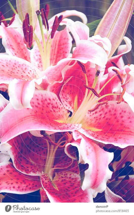 Nature Plant Green Beautiful White Flower Joy Yellow Love Emotions Moody Pink Birthday Romance Bouquet Valentine's Day
