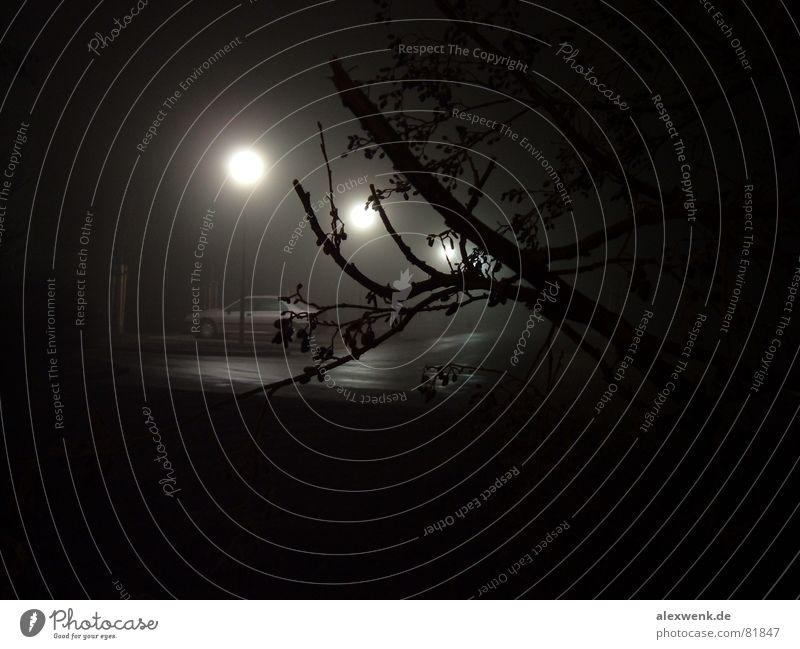 Tree Calm Black Street Dark Cold Autumn Sadness Lanes & trails Car Contentment Fear Fog Wet Sleep Fresh