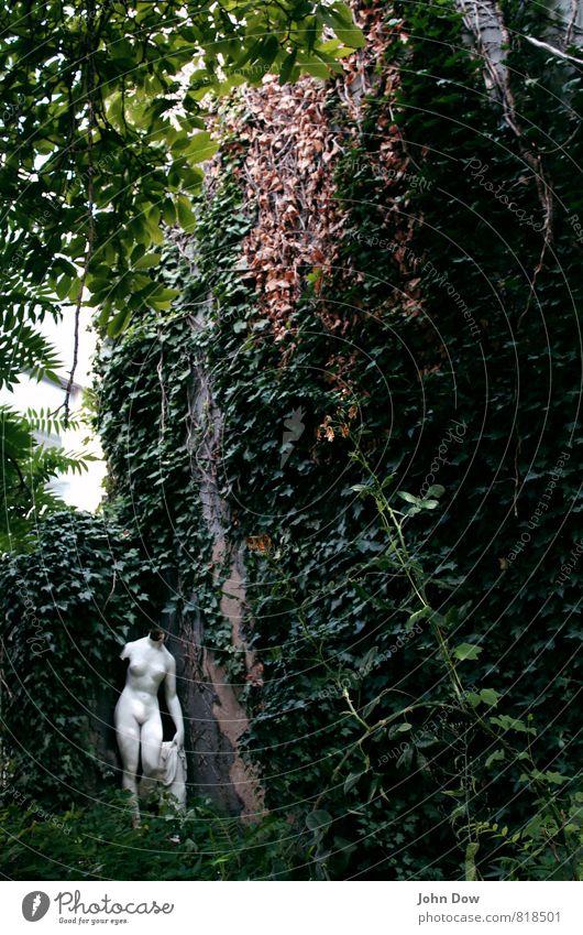 Plant Beautiful Tree Loneliness Grass Garden Art Bushes Esthetic Derelict Statue Sculpture Flake off Ancient Forget Fern