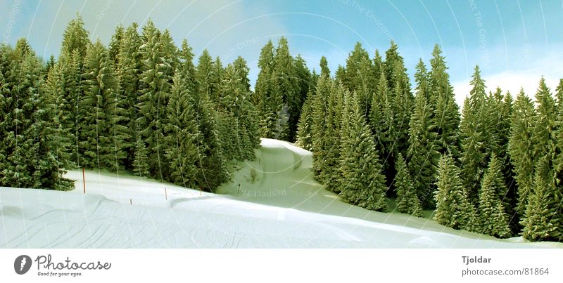 Nature Sky White Tree Green Blue Winter Vacation & Travel Loneliness Forest Cold Snow Mountain Landscape Air Ice