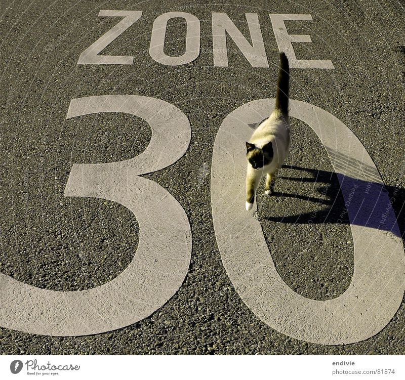 Animal Street Cat Speed Lawn Leisure and hobbies Asphalt Tar Zone 30 30 mph zone