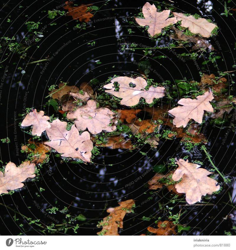 Nature Water Green Leaf Black Dark Autumn Lake Wind Dry Pond Blow Like