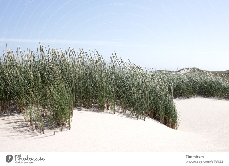 hairy on top. Vacation & Travel Environment Nature Plant Sky Beautiful weather Beach dune Denmark Sand Esthetic Natural Blue Green Emotions