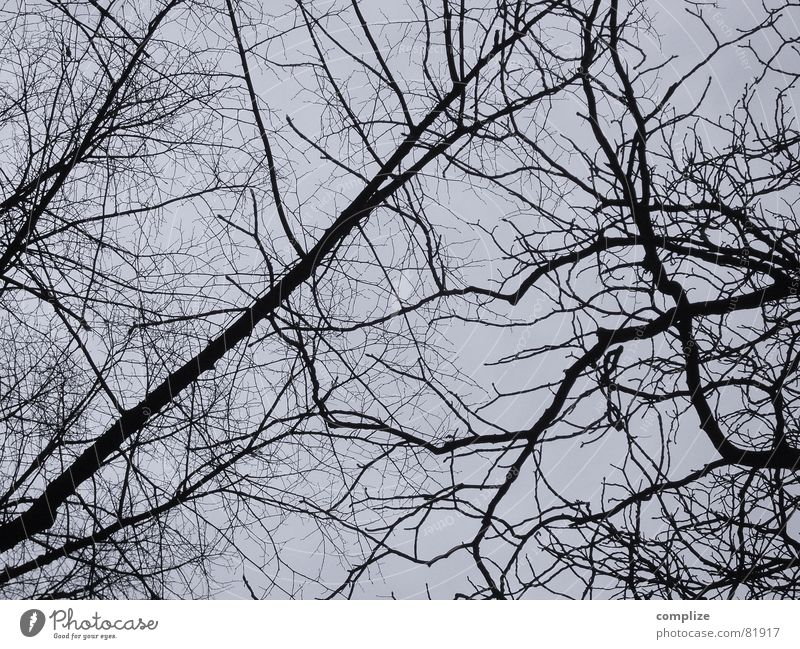 parted Resign Tree Leaf Plant Winter Part of the plant Botany Branchage Gray Dark Muddled Chaos None Twig Nature black-white Detective novel