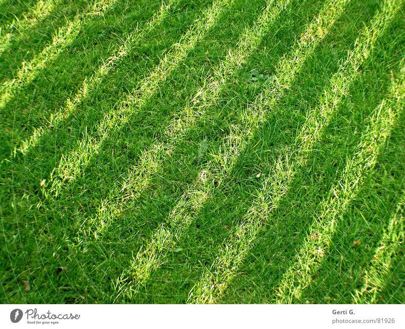 Green strip Park Stripe Striped Grass Meadow Diagonal Dark Blade of grass Summer Bilious green Lawnmower Zebra crossing Foliage plant Joy forage lawnmower man