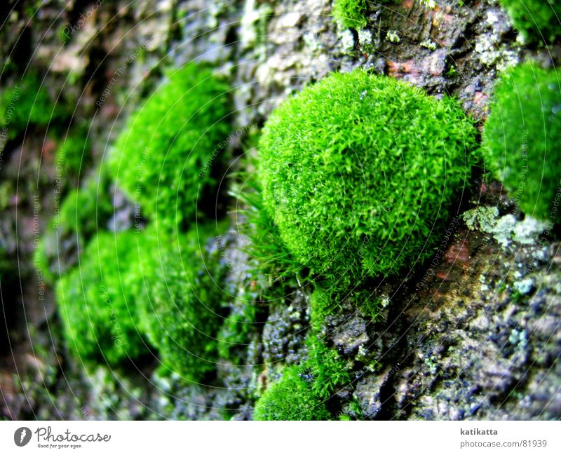 moss Tree Green Tree bark Soft Delicate Clearing Tree trunk Glade Environment Nature To go for a walk Emotions wooded valley Moss