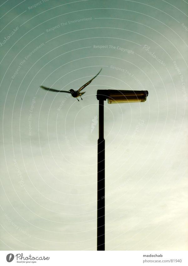 Sky Blue Calm Animal Loneliness Emotions Gray Lamp Bird Sit Gloomy Peace Lantern Street lighting Decent