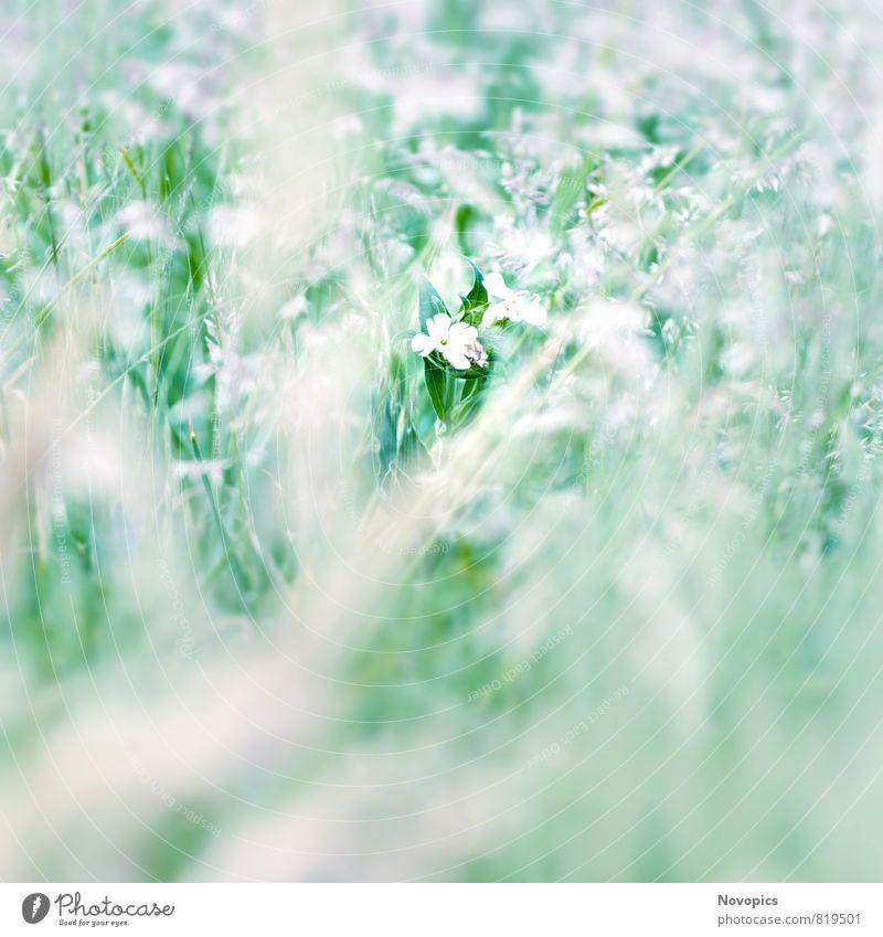 one of many Nature Landscape Plant Flower Leaf Blossom Wild plant Meadow Green White Crucifer blurriness Planning maedov grassland bloom crucier Colour photo