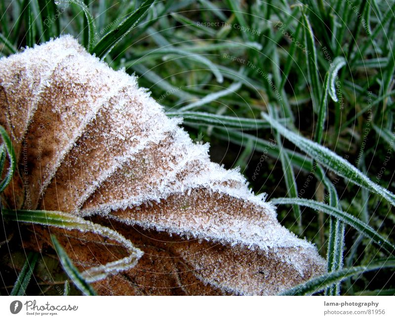 chill Cold Leaf Grass Blade of grass Ice Meadow Green space Plant Environment Fresh Autumn Brown Frozen Ice crystal Express train Macro (Extreme close-up)