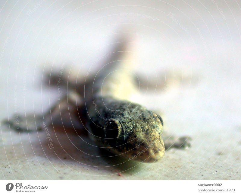 Vacation & Travel Animal Reptiles Amphibian Mosquitos Saurians Indonesia Gecko Lizards
