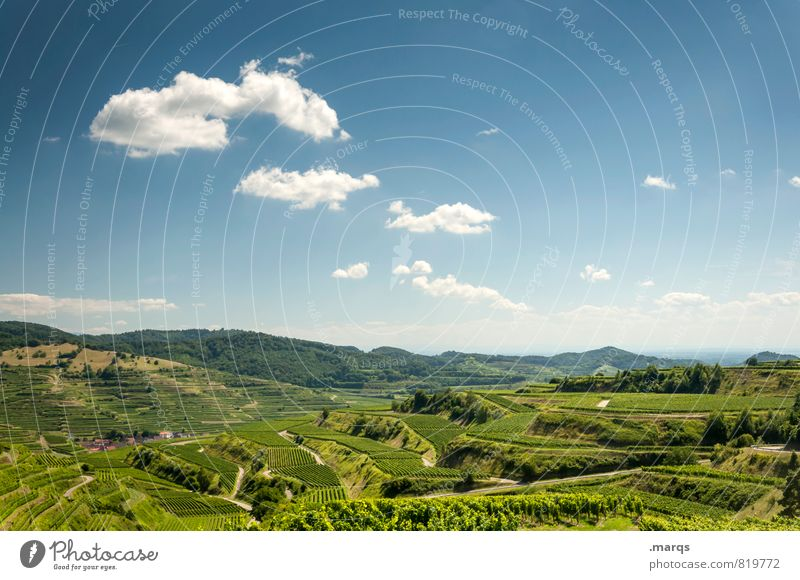 terraces Vacation & Travel Tourism Trip Summer Hiking Nature Landscape Sky Clouds Horizon Beautiful weather Field Vineyard Wine growing Terraced fields