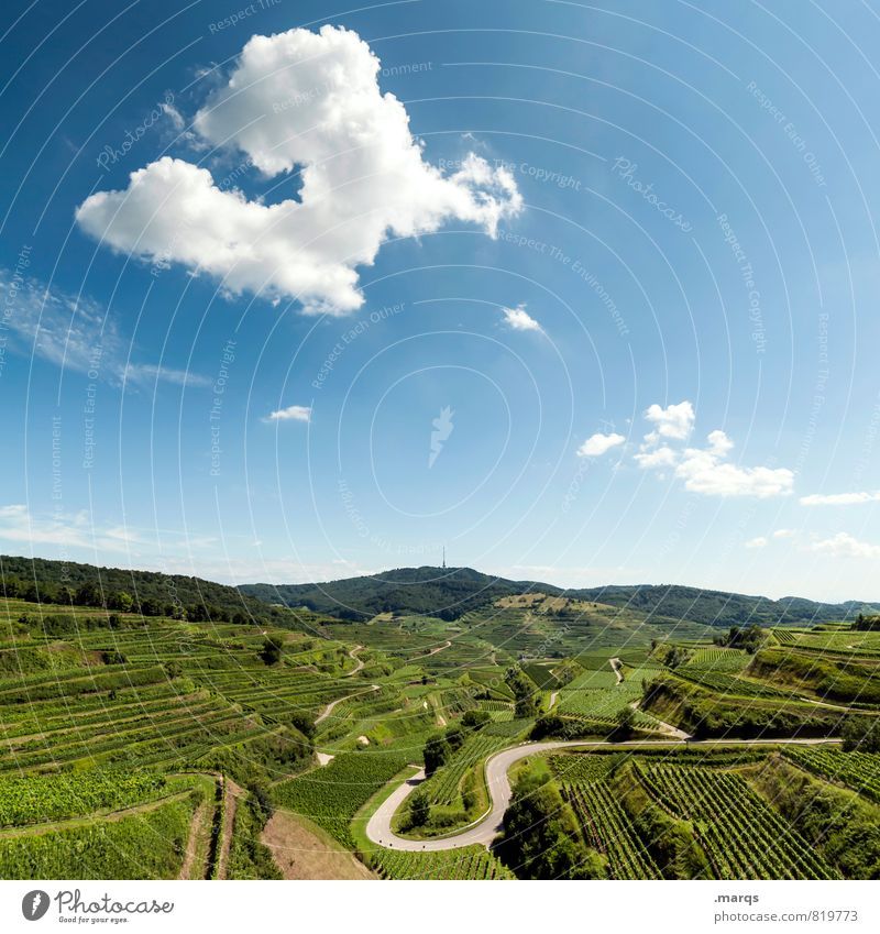 U Trip Environment Nature Landscape Sky Clouds Horizon Summer Autumn Beautiful weather Vineyard Wine growing Winery Traffic infrastructure Street Curve