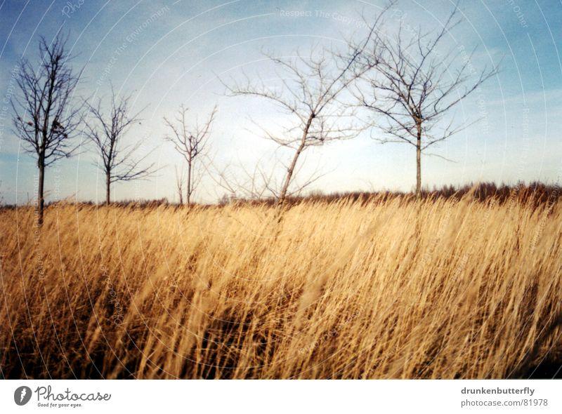 Sky Blue Tree Loneliness Winter Far-off places Landscape Meadow Grass Horizon Wind Field Branch Pasture Tree trunk Few