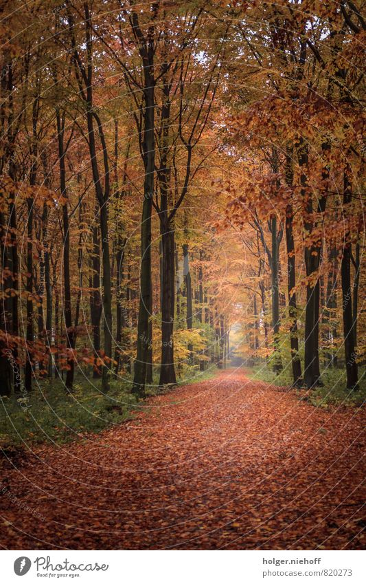 Nature Green Tree Red Far-off places Forest Cold Yellow Autumn Lanes & trails Wood Freedom Brown Horizon Park Gold