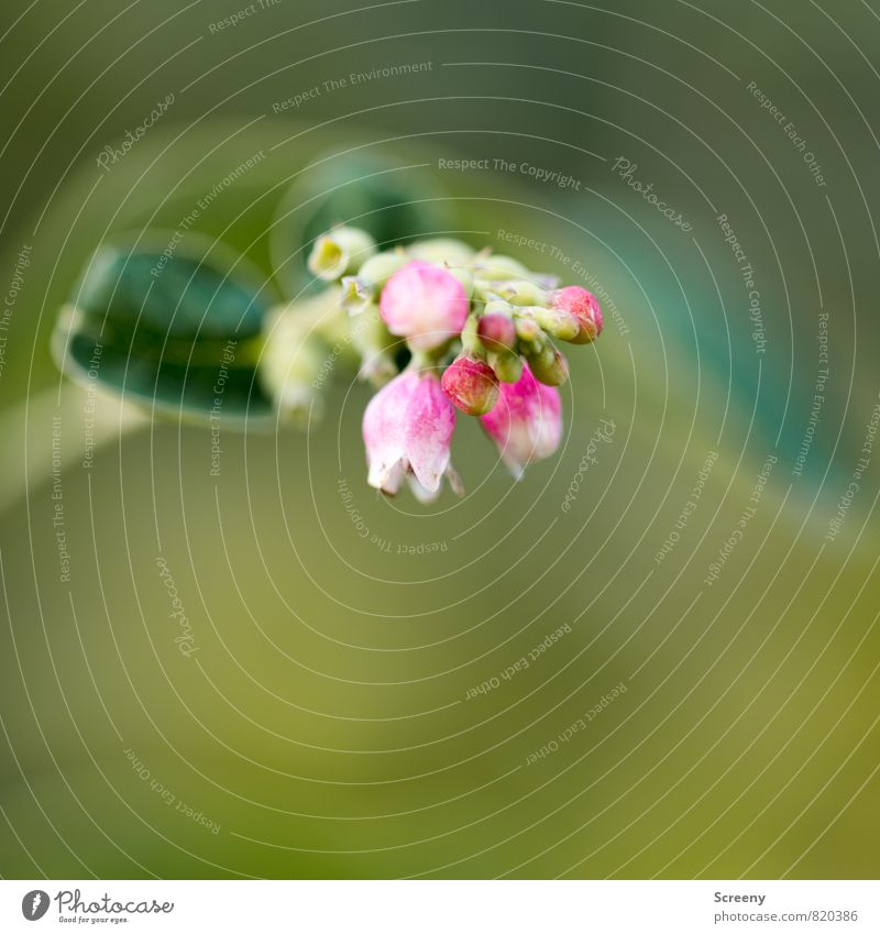 Small Nature Plant Spring Summer Bushes Leaf Blossom Park Blossoming Fragrance Growth Green Pink White Delicate Colour photo Macro (Extreme close-up) Deserted