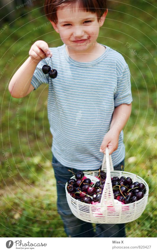sweet tooth Food Fruit Nutrition Eating Picnic Organic produce Garden Human being Child Toddler Girl Boy (child) Infancy 1 1 - 3 years 3 - 8 years Summer
