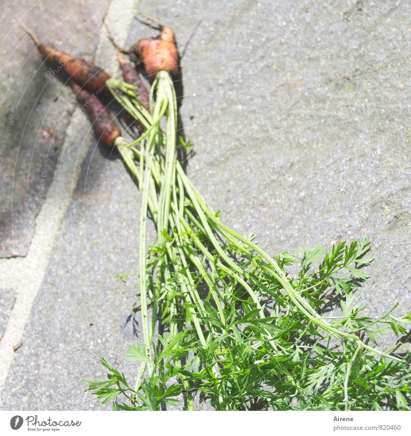 naturally grown Vegetable Carrot Organic produce Vegetarian diet Earth Plant Agricultural crop Root vegetable Herbacious Foliage plant Crops Garden Field Dirty