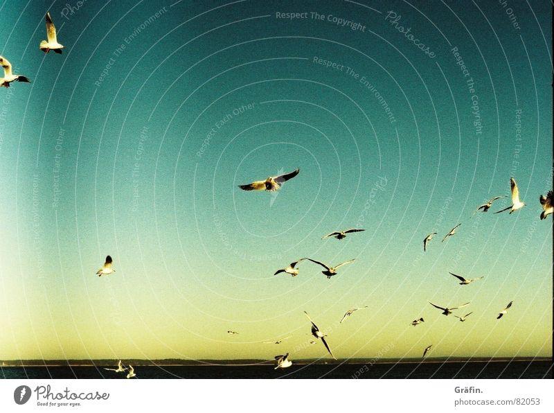 Water Sky Sun Ocean Far-off places Bird Flying Horizon Wing Seagull Flock Xpro