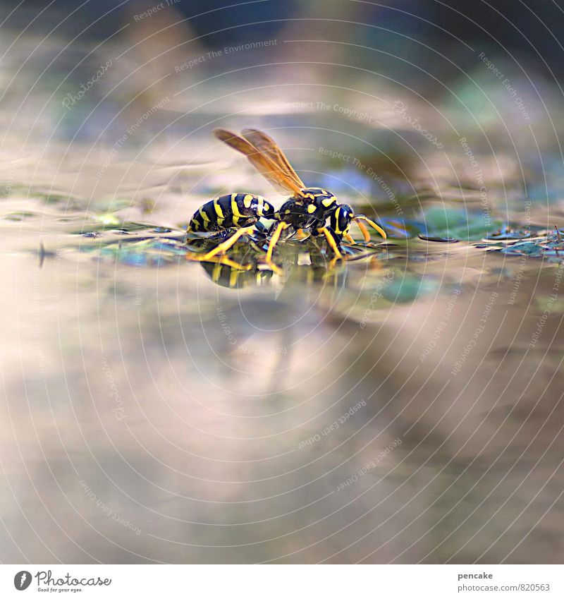 Pond dreams. Swim wings. Elements Water Summer Plant Garden Animal Wasps field wasp 1 Drinking Colour photo Exterior shot Close-up Macro (Extreme close-up)