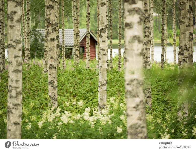 Birch Forest & Sauna Relaxation Swimming & Bathing Vacation & Travel Summer Summer vacation Nature Meadow Lakeside Pond House (Residential Structure) Hut