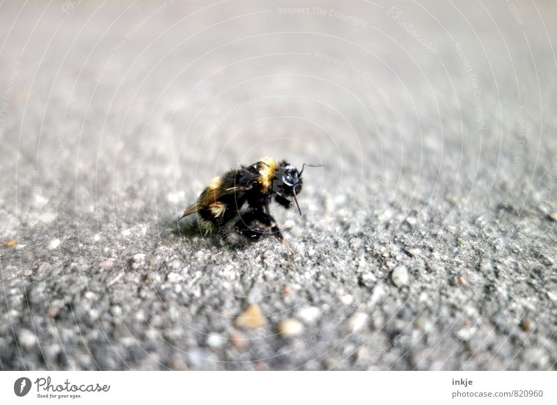 burnout Deserted Street Lanes & trails Animal Wild animal Dead animal Bumble bee 1 Old Relaxation Crouch Authentic Broken Small Under Emotions Unwavering Death