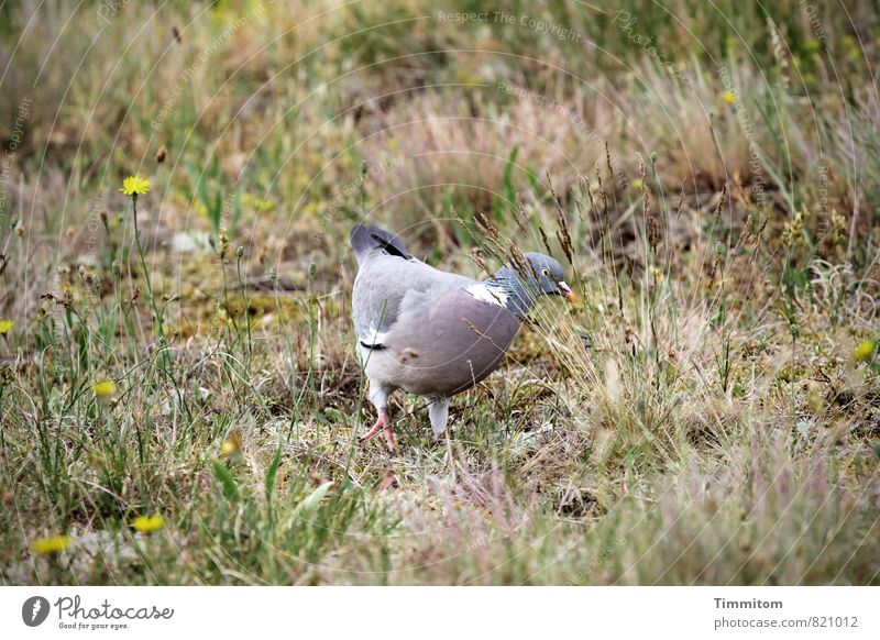 Nature Plant Flower Animal Environment Emotions Grass Natural Beautiful weather Simple Pigeon Denmark