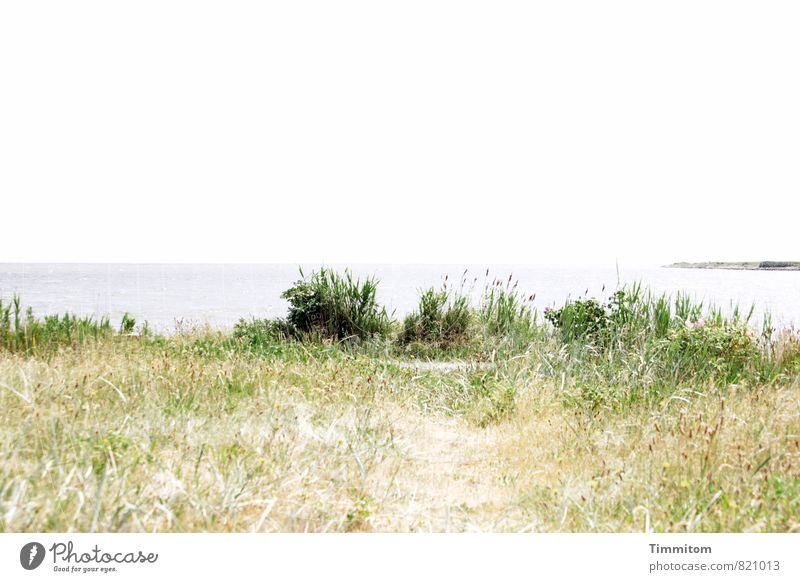 The long way home. Environment Nature Landscape Plant Elements Sand Water Sky Summer Beautiful weather North Sea Denmark Lanes & trails Looking Wait Esthetic