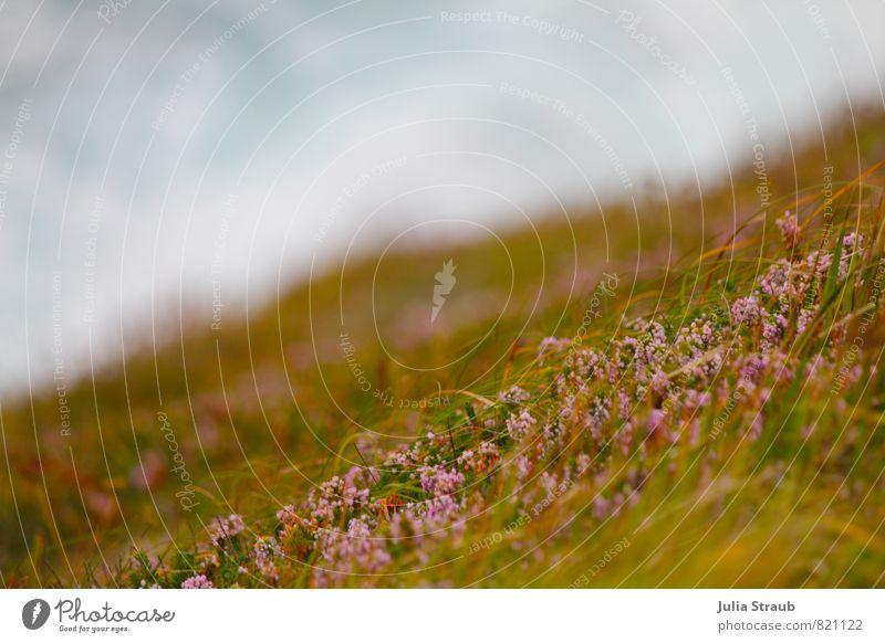 Green Summer Ocean Environment Grass Pink Waves Climate Light blue Heather family