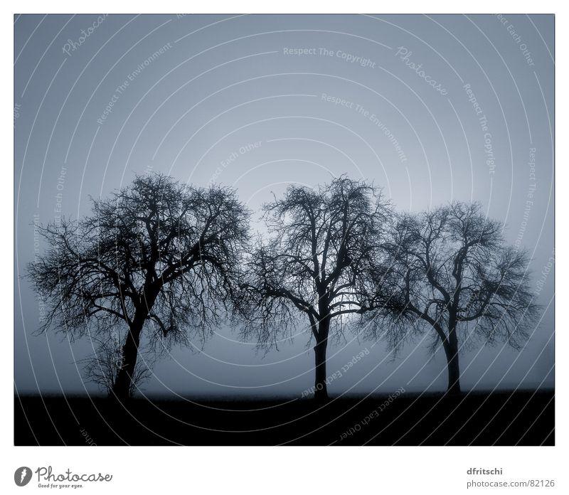 Sun Blue Winter Colour Dark Cold Dream Think Bright Fog Grief Places Change Transience Seasons Progress