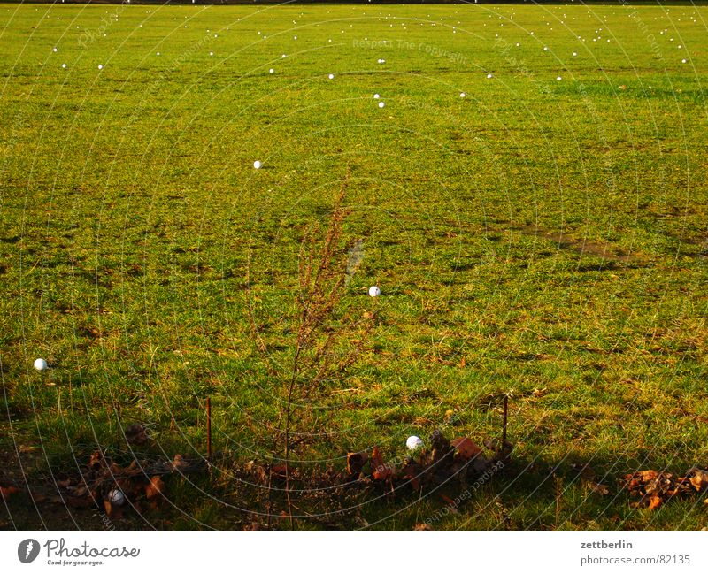 Green Meadow Grass Playing Earth Agriculture Pasture Village Ball Grass surface Real estate Agriculture Golf Ball sports Knoll Sweep
