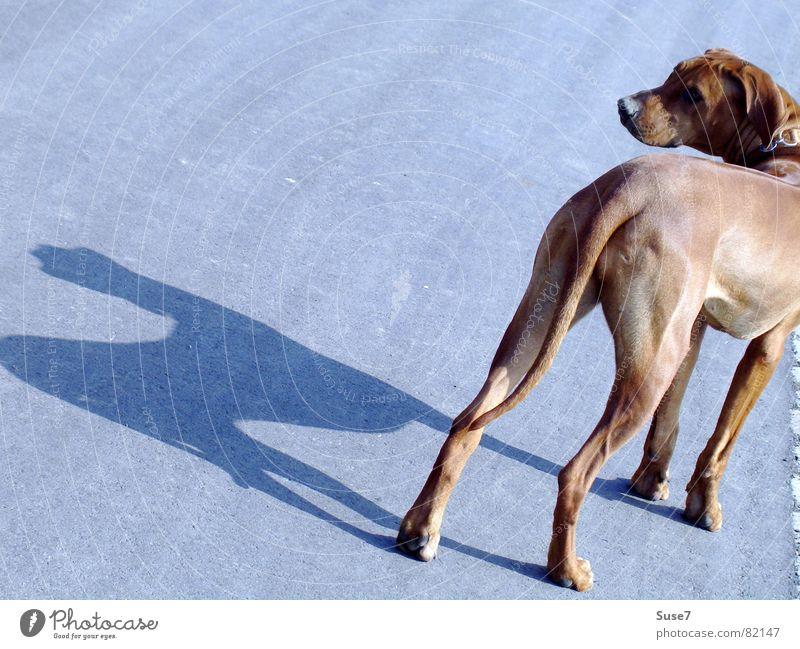 shadow dog Dog Animal Asphalt Stop Mammal Shadow Look back