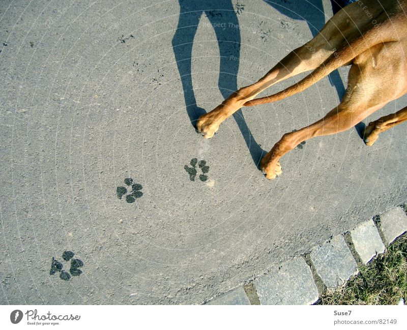 Dog Lanes & trails Crazy Perspective Hind quarters Asphalt Tracks Transience Footprint Mammal Paw
