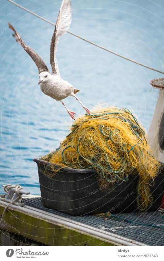 take off Fishery North Sea Baltic Sea Ocean Fishing village Seagull 1 Animal Flying Exceptional Maritime Positive Life Esthetic Movement Relationship Idyll