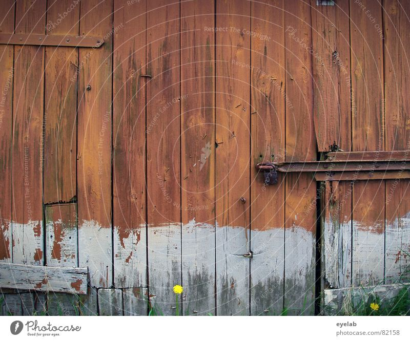Flower Red Summer Wall (building) Wood Gray Wall (barrier) Brown Field Door Castle Derelict Agriculture Decline Hut Rust