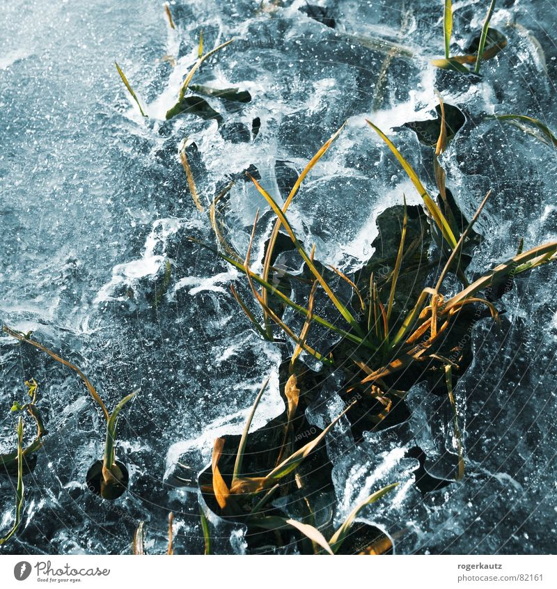 Winter Cold Meadow Grass Ice Frost Lawn Still Life Blade of grass Puddle Breach