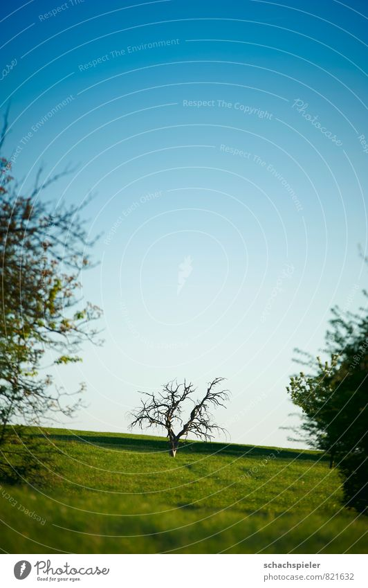 half full half Nature Landscape Animal Sky Cloudless sky Spring Beautiful weather Plant Tree Meadow Hill Old Blue Green Transience Colour photo Exterior shot