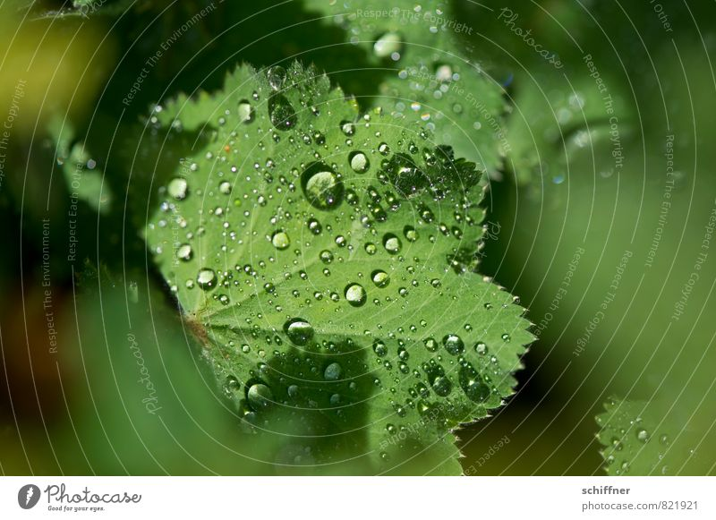 pearl collector Environment Nature Plant Leaf Wet Green Rope Dew Fresh Morning Rain Hydrophobic Wellness Fragile Close-up Macro (Extreme close-up) Deserted