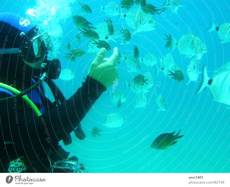 Water Ocean Fish Dive Air bubble Diver