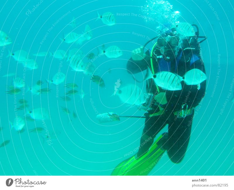 Under the sea 2 Diver Ocean Underwater photo Air bubble Water Fish