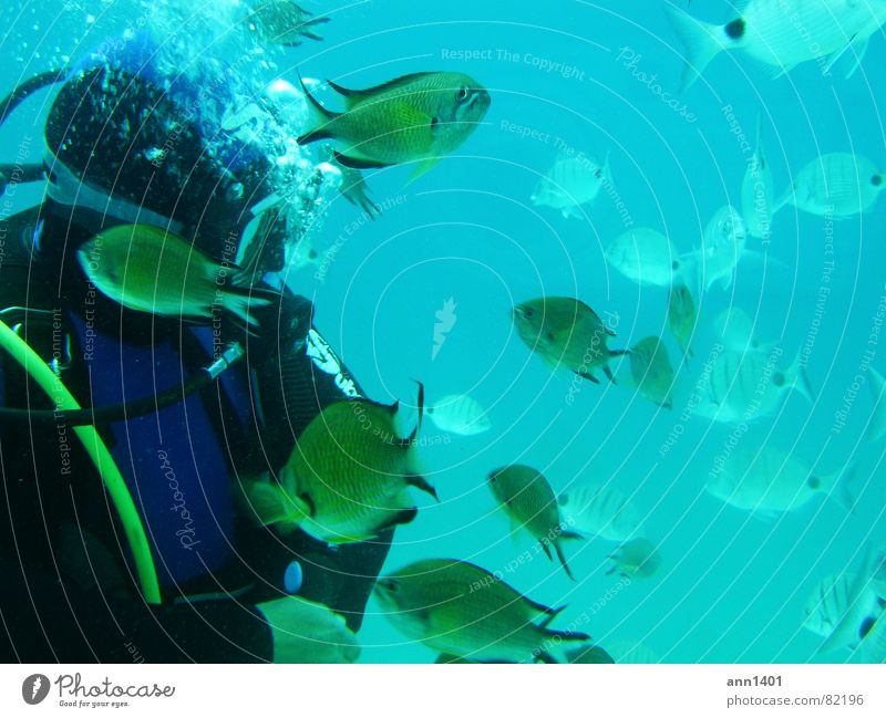 Under the sea 3 Diver Ocean Underwater photo Air bubble Water Fish