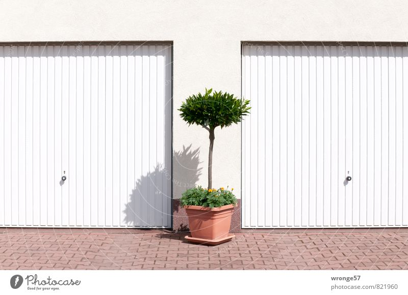 Cost.bar Treasure chests. Garage Wall (barrier) Wall (building) Garage door Town Brown Green White Plant Pot plant Colour photo Subdued colour Exterior shot