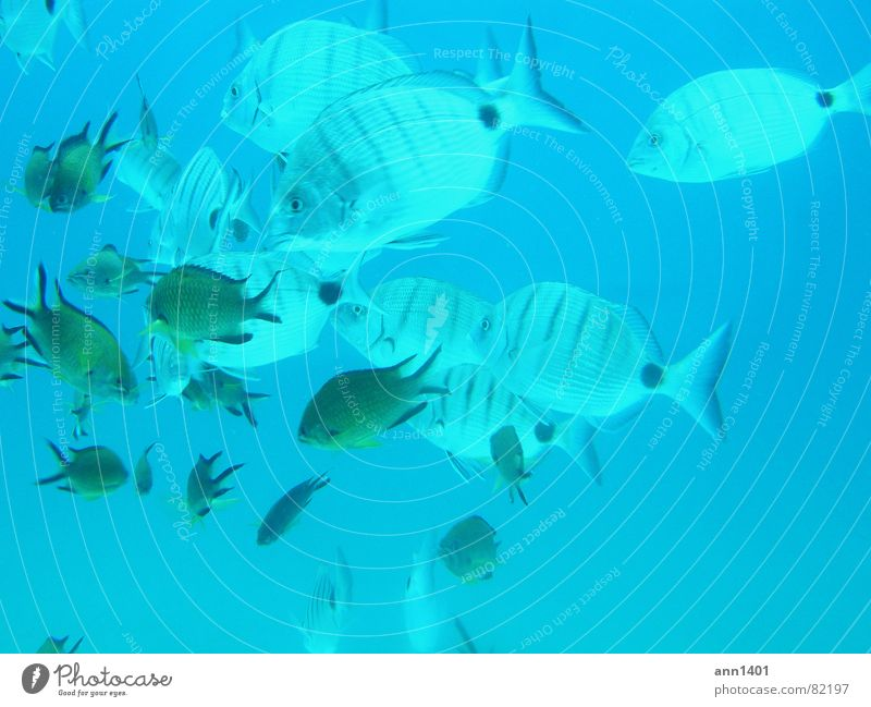 Under the sea 4 Dive Ocean Underwater photo Air bubble Water Fish
