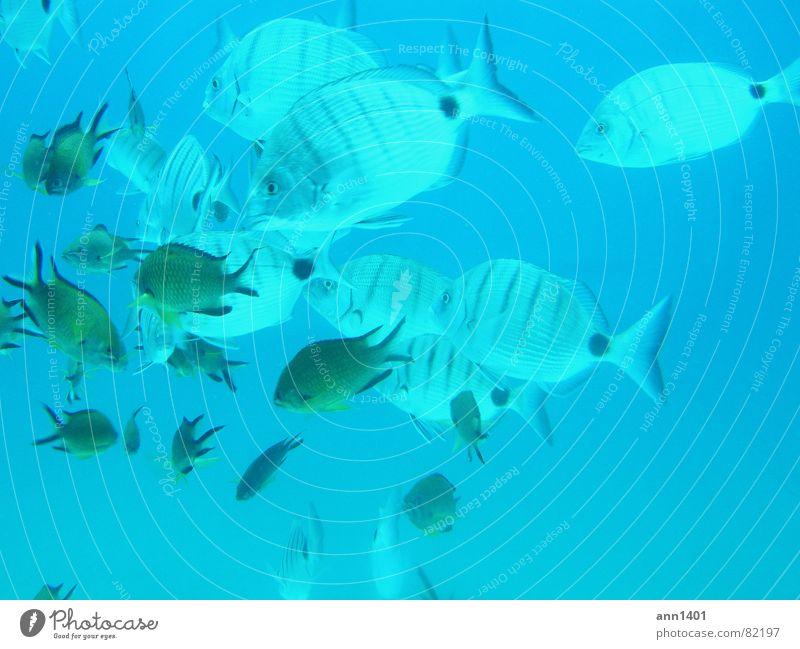 Water Ocean Fish Dive Air bubble Underwater photo